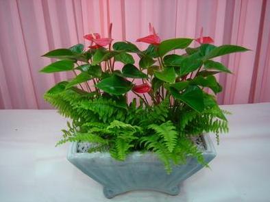 办公室花卉租赁种植方法